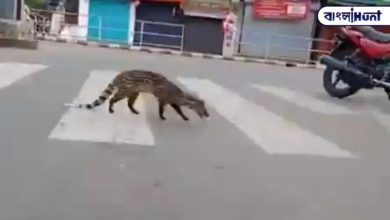 Photo of Lockdown entire country, Malabar civet and sambar deer roaming the sunshine streets