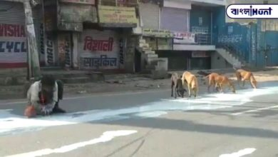 Photo of People and dogs are feeding on stomach irritation, milk dumped in the streets