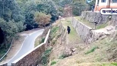 Photo of Police, viral video of a bear appearing to chase a monkey
