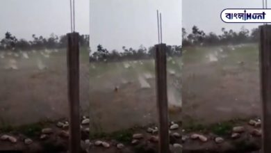 Photo of The size of a cricket ball is constantly falling from the sky, is the viral video from Chhattisgarh?
