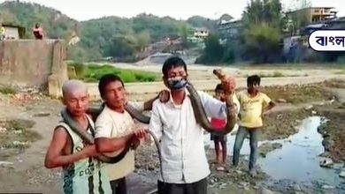 Photo of There was no food in the house, so the people were killed by killing a cobra of 5 feet