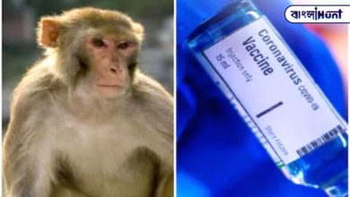 Photo of Vaccine works on monkeys, now Oxford University is looking for people instead of big money for trials