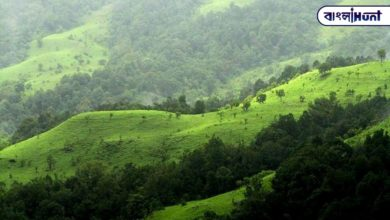 Photo of More than 200,000 trees in the Western Ghats could be cut down to build the railway