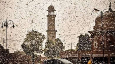 Photo of The sky is full of locusts, watch the horrific video of the western states of the country including Rajasthan