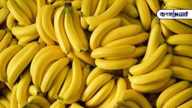Photo of Viral video: Hundreds of bananas in a banana tree, everyone in the village is eating a banana from a tree