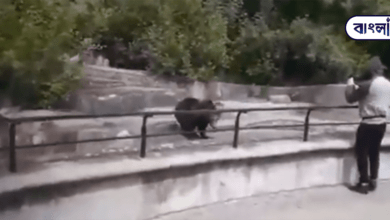 Photo of The drunk tried to drown the bear in the cage! What happened then? Watch the video