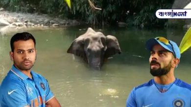 Photo of Storm of condemnation across the country! In Kerala, Virat-Rohit roared after killing a pregnant elephant.