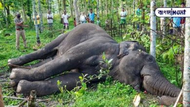 Photo of Elephant dies again, 1 month old elephant dies due to broken jaw in Kollam district