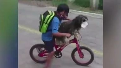 Photo of Short, extreme viral video of a dog riding a bicycle wearing a mask