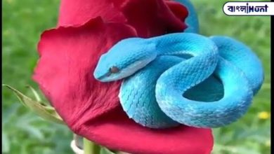 Photo of As beautiful as it is terrible! Video of this blue snake going viral across Netpara