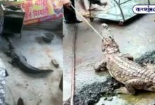 Photo of Unable to control the greed of biryani crocodile entered the store! Violent viral video
