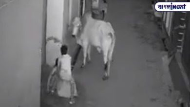 Photo of Khude fights with bull to save Dida, viral video on social media