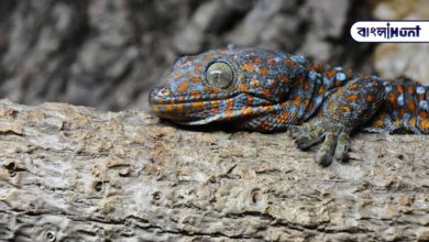 Photo of Rangberang's beautiful lizard costs 50 million! Available in India