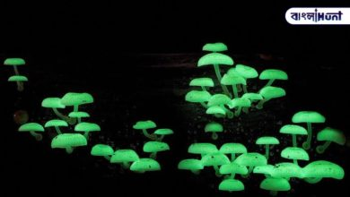 Photo of Strange mushrooms are spreading magical light across the forest at night in Goa