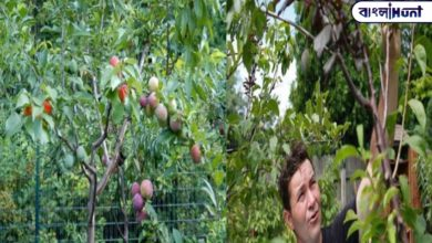 Photo of 40 kinds of fruit on the same tree! Find out where the wonder trees are