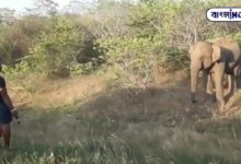 Photo of The elephant was annoying the young man should teach the elephant, the video went viral on social media