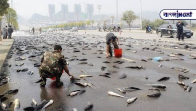 Photo of Twice a year the whole area is covered in fish rain! Find out where it happens