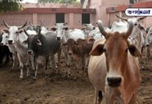 Photo of The world's first cattle cabinet meeting! Surprise stems from the Madhya Pradesh government